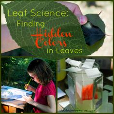 Leaf Science: 5 Steps to Simple Chromatography. Cool for kids! Kindergarten Science Projects, Science Activities For Kids, Preschool Science, Math For Kids, Primary Science, Science Biology, Social Studies Classroom, Easy Science Experiments, Summer Reading Program