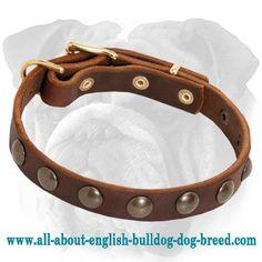 Perfect Studded Leather Collar for English Bulldog Puppy $34.90 #englishbulldog #dog #accessory #collar #puppy
