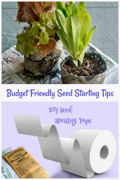 Budget Friendly seed starting tips and other time saving and money saving gardening hacks to try. #vegetablegardenhacks #lifehacks #budgetgarden #gardeningtips #gardenDIY Veggie Gardens, Vegetable Gardening, Garden Diy On A Budget, Gardening Hacks, Melting Pot, Time Saving, Funky Junk, How To Make Light, Seed Starting