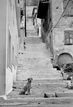 Street dog, Greece.