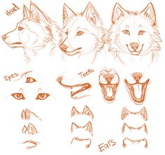 old anatomy sheet -1 by TechnicolorDog.deviantart.com on @deviantART