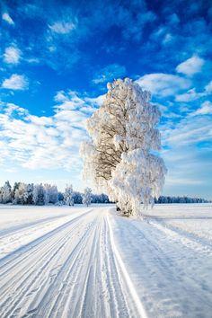 ponderation:  Winter Wonderland by Sven-Erik Lundby