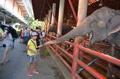 самое дорогое что у меня есть: Тайланд 2015