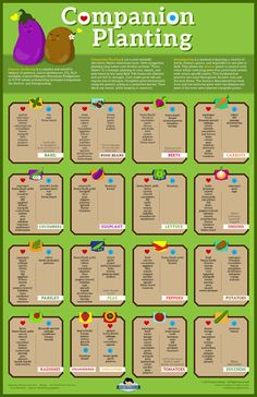 luluesque-companion planting chart-b #OrganicGarden