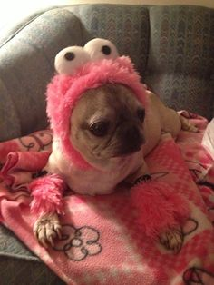 Gizmo is getting ready for Halloween. Pink furry monsters are the beat!