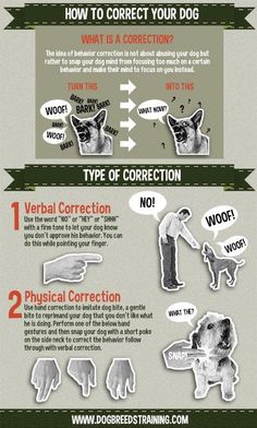 How to Correct Your Dog Behavior | Cody Crown's Dog Breeds Training Center