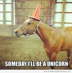 """A horse with a traffic cone on his head wants you to know that """"Someday I'll be a Unicorn"""""""