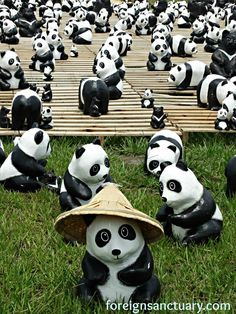 Taking Taiwan By Storm: 1600 Paper Pandas and 200 Paper Formosan Black Bears  In the photothe Straw Hat Paper Panda Bear in Nantou