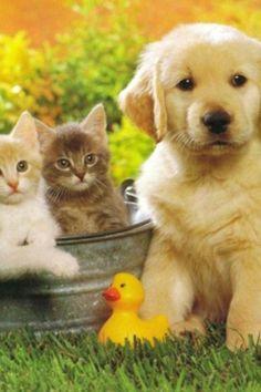 cute puppy and kittens #cuteanimals #puppykittens