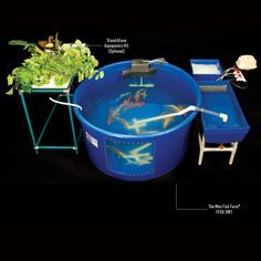 The Mini Fish Farm
