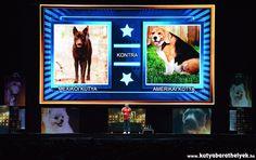 Cesar Millan Live Budapest - Mexikói vs. amerikai kutyák Cesar Millan, Minden, Budapest, Dog, Live, Frame, Home Decor, Diy Dog, Picture Frame
