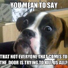 Boxers! never fails, our ups guy is terrified of my dogs. They are really nice, once you get in. hahahahha