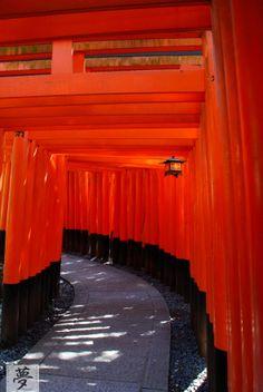 Fushimi Inari Shrine, Torii way  #japan #kyoto #fushimi #shrine #torii
