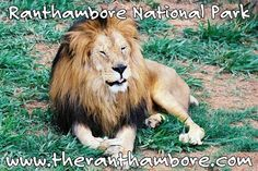 Ranthambore National Park is one of the few places in India where you can see the tiger in its natural habitat. Naturally, there are a lot of tourists from within as well as outside India who come to visit Ranthambore.