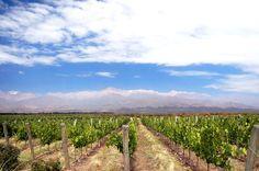 As mais belas vinícolas da América do Sul