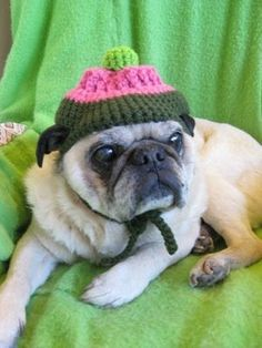 My Emmitt is sending you kisses ~ Cupcake Hat for Dogs Crochet Pattern 104 by ChristinasKewlStuff, $3.95