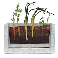 The Root Vue Farm is a self-watering grow unit with a special viewing window so kids can watch roots develop underground. Watch carrot, radish, and onion seeds grow up as their roots grow down. The complete kit includes a durable styrofoam growing unit with acrylic viewing window, built-in water basin and drainage reservoir. A light shield keeps plants growing but can be removed for viewing roots.
