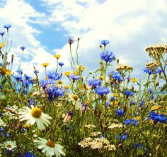 wild flower meadow - from Country Rabbit blog
