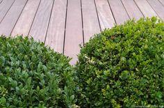 58 beste afbeeldingen van hoveniersbedrijf tim kok gardens
