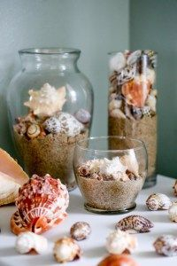 How to clean sea shells, coral, and sea urchins