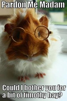 Piggy.  Wearing glasses.  Basically the cutest thing ever.