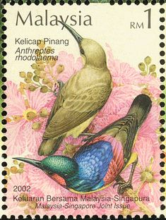 Red-throated Sunbird stamps - mainly images - gallery format