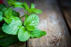 Hoofdpijn, een verkoudheid of spijsverteringsproblemen, munt is hét antwoord op al deze kwaaltjes! Ook naast de keuken scoort de plant goed!