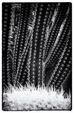 #Seppo #Nurmi's #cactus #photo. Cactus, Curtains, Photography, Home Decor, Blinds, Photograph, Photography Business, Photoshoot, Fotografie