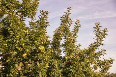 Le Domaine du Martinaa: Pomme du Martinaa