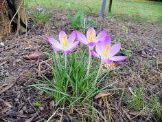 #bashotel #kraków #ogród #kwiaty #wiosna Plants