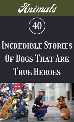 There's just something special about the bonds that owners have with their four-legged best friends. #40 #Incredible #Stories #TrueHeroes Graduation Poems, Dog Stories, Baby Swings, Marriage Relationship, Hollywood Actor, Cool Paintings, Whales, Fencing, Face Care