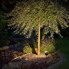 Exterior garden lighting for outdoor spaces. Garden lighting design, ideas and advice for spike lights, wall lanterns, flood lights and more. Contemporary Outdoor Lighting, Landscape Lighting, Black Garden, Wall Lantern, Types Of Lighting, Tree Lighting, Exterior Lighting, Incandescent Bulbs, Led Lamp
