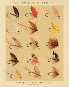 Trout Flies Fishing Print Fly Art Decor Old Prints Lake Cabin Antique Wall Home