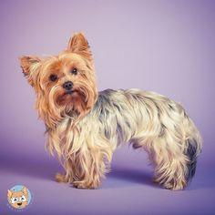 Weil ihr gestern mein Studiobild so toll fandet gibts heute wieder eins.  Auch kamen einige Fragen zur Studiofotografie. Daher werde ich mich bemühen in der nächsten Woche einen Beitrag im Blog zur Studiofotografie zu schreiben.  Gern könnt ihr mir hier noch all eure Fragen stellen die ihr zu diesem Thema habt! Ich werde dann versuchen diese im Blogbeitrag zu beantworten.  #bestwoof #a_dogsworld #barkbox #dogscorner #dog_features #dogsofinstagram @dogsofinstagram #excellent_dogs…