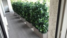 Terrazzo, House Design, World, Balcony Ideas, Garage, Beautiful, Gardens, Environment, Gatos