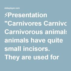 """⚡Presentation """"Carnivores Carnivorous animals have quite small incisors. They are used for grasping not cutting. Carnivores have long and strong canines and thin, sharp."""""""