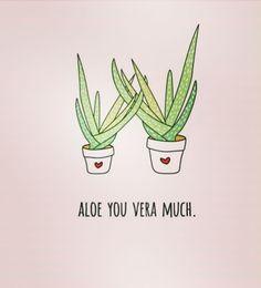 #aloevera #aloeveraforeverliving #aloeforfood #aloefordrink #aloeforhealth #aloeforanimals #aloeforever #aloeforhealing