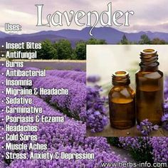 Need to buy lavender!!!