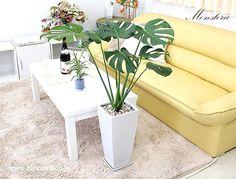 葉の形もオシャレで大きめな葉のモンステラ。幹からは気根とよばれる根も出すおもしろい観葉植物です。育てやすくインテリアプランツとしてもおすすめ。風水的にも良いとされています。モンステラを飾って、素敵な空間に!★花言葉:嬉しい便り、深い関係  #観葉植物 #インテリア #モンステラ #ブルーミングスケープ http://www.bloom-s.co.jp/fs/bloomingscape/g7-monsub