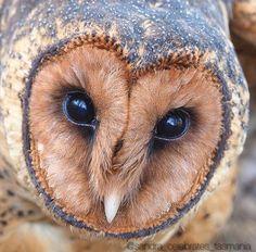 heart shaped owl face ❤