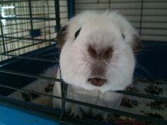 come a little closer so i can give u a guinea kiss
