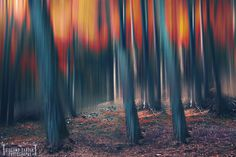 """The forest is Burning - Facebook:<div class=""""fb-page""""><div class=""""fb-xfbml-parse-ignore""""><blockquote cite=""""https://www.facebook.com/giacomocardeaphotographer/""""><a href=""""https://www.facebook.com/giacomocardeaphotographer/"""">Giacomo Cardea Photographer</a></blockquote></div></div>Instagram:  <div class=""""fb-page""""><div class=""""fb-xfbml-parse-ignore""""><blockquote cite=""""https://www.instagram.com/giacomo.cardea.photo//""""><a…"""