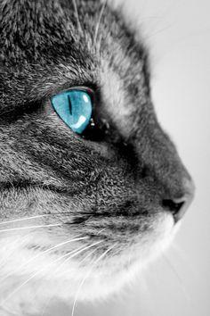 Blue Eyed Micky III by wassy1708, via Flickr