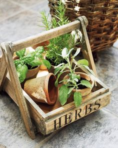 Get The Perfect Herb Garden With These Simple Tips Herb gardening is an excellent way to make sure that your family is getting the best produce that they can. Herb Garden Design, Diy Herb Garden, Herbs Garden, Garden Ideas, Edible Garden, Spices And Herbs, Fresh Herbs, Growing Herbs, Herbalism