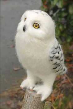 I needle felted this Snowy Owl in 4 days. Needle felting is using wool roving and stabbing the fibers with a very sharp, barbed needles. A needle felted, Snowy Owl Felt Animals, Animals And Pets, Baby Animals, Cute Animals, Baby Owls, Beautiful Owl, Animals Beautiful, Pretty Birds, Love Birds