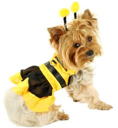 Shop our small dog boutique for cute dog costumes this halloween. Pet Costumes For Dogs, Cute Dog Costumes, Puppy Costume, Animal Costumes, Cat Costumes, Halloween Costumes For Girls, Yorkies, Chien Halloween, Chien Yorkshire Terrier