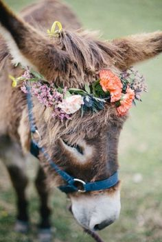 Little Burro with wildflowers in her mane.