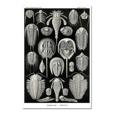 Horseshoe Crab Art Print or Poster,  Ernst Haeckel Illustration, Monochrome Art, Art Nouveau Decor, Natural History Art, Black and White Art