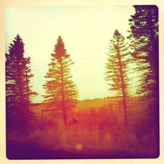The woods of McGregor,MN