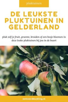 In een pluktuin kun je zelf jouw bosje bloemen of verse groente en fruit plukken. Er zijn pluktuinen te vinden door heel Nederland, van kleine tuinen bij particulieren tot grote akkers behorend bij het erf van een boer. Ik zet de leukste pluktuinen in Gelderland op een rij. Good Vibe, Awkward, Vegetables, Vegetable Recipes, Veggies